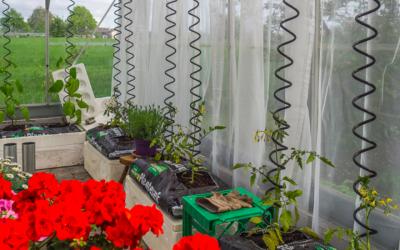 Nu er alle planter på plads i drivhuset og endda med nye skyggegardiner